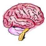 Colorful sketch of brain